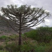 Tsavo Ouest