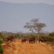 Kenya, Tsavo Est