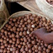 Kenya, Mombasa, Noix de Macadamia