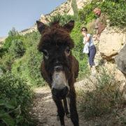 Tiens un âne ...croisé lors d'une ballade autour du village de Dana
