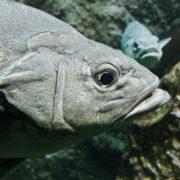 Océanopolis: les aquariums de la zone tempérée