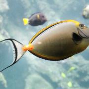 Océanopolis: les aquariums de la zone tropicale
