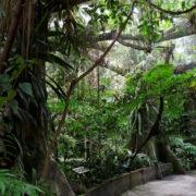 Océanopolis: zone tropicale