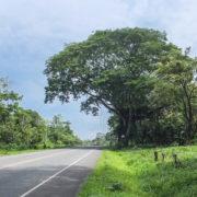 L'Arbre National, le Guanacaste