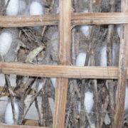 A l'atelier de soieries: formation des cocons