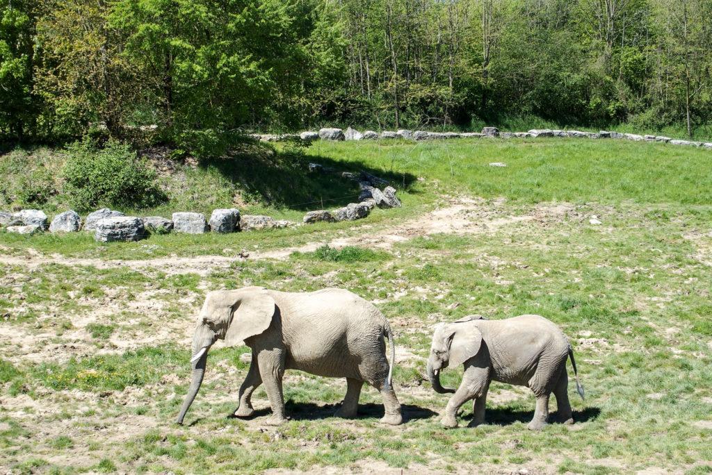 Plaine panoramique des éléphants