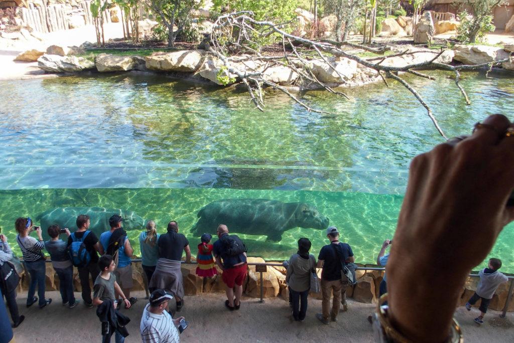 Le grand bassin des Hippopotames avec vision sous-marine