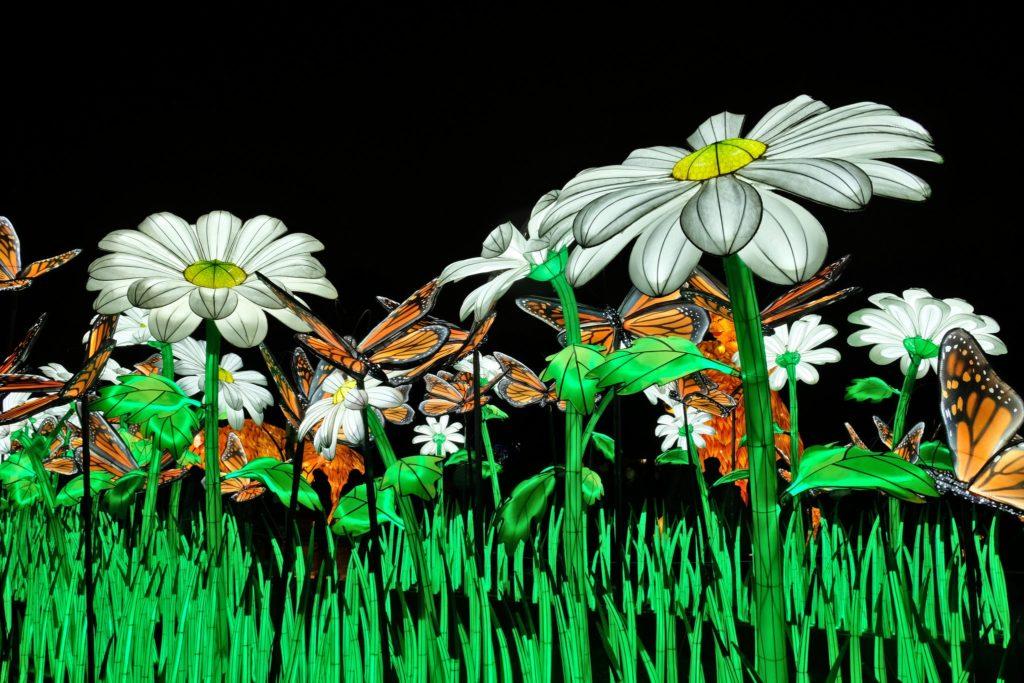 Illumination-JardinDesPlantes-0011