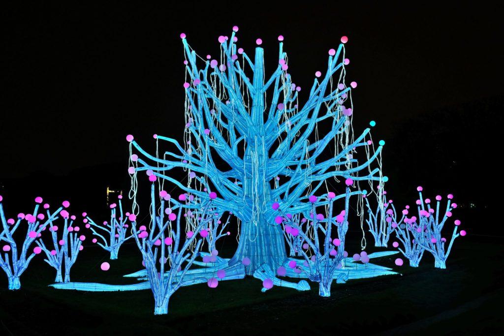 Illumination-JardinDesPlantes-0019