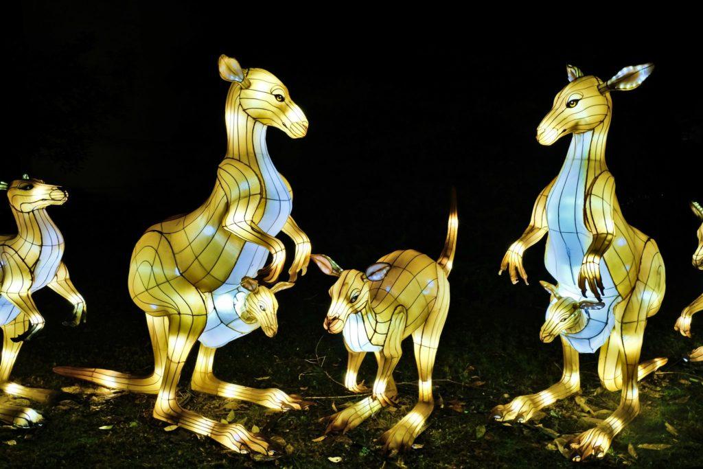 Illumination-JardinDesPlantes-0031