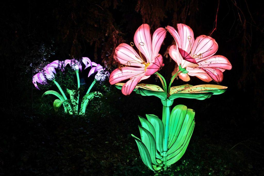 Illumination-JardinDesPlantes-0037