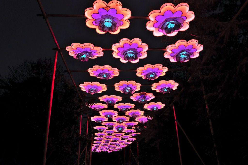 Illumination-JardinDesPlantes-0043