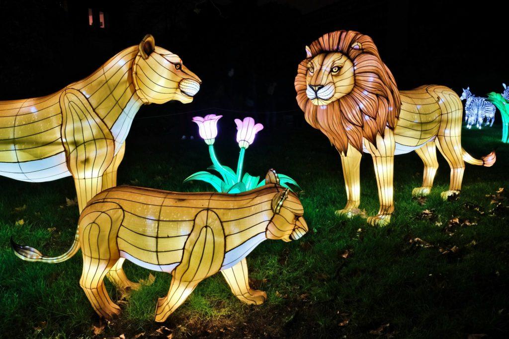 Illumination-JardinDesPlantes-0046
