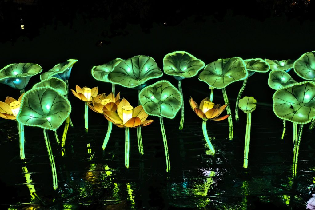 Illumination-JardinDesPlantes-0048