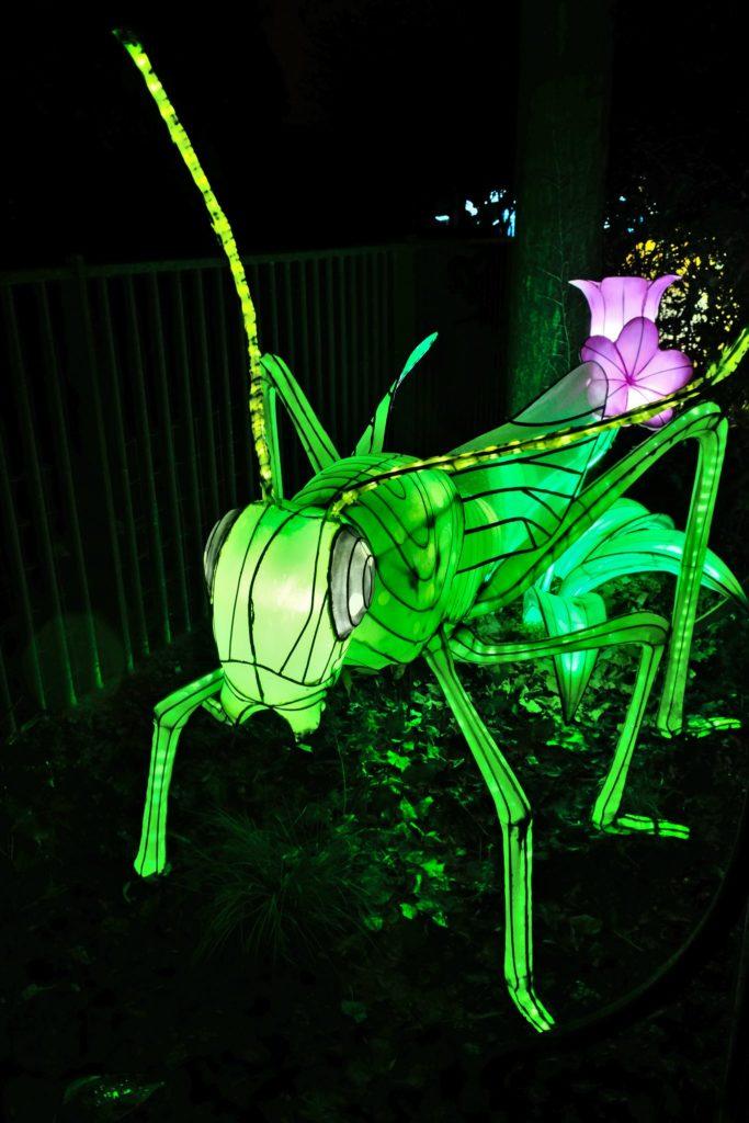 Illumination-JardinDesPlantes-0054
