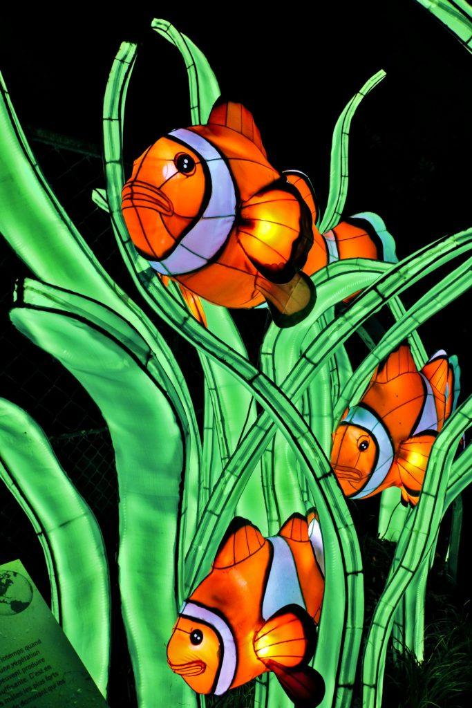 Illumination-JardinDesPlantes-0065